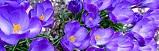 Fotoreporterzy zklasy 3b natropie wiosny